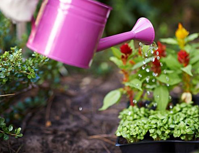 pink watering can above some plants.jpg