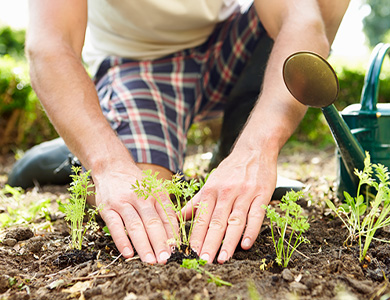 person planting seedlings